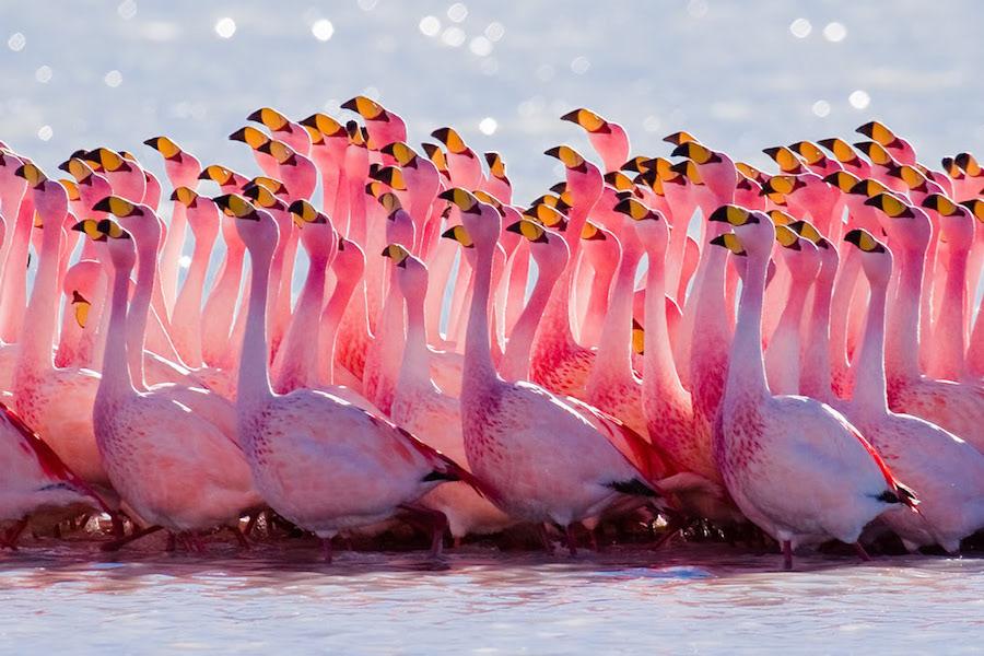 rozovye flamingo na Solenom ozere na Kipre