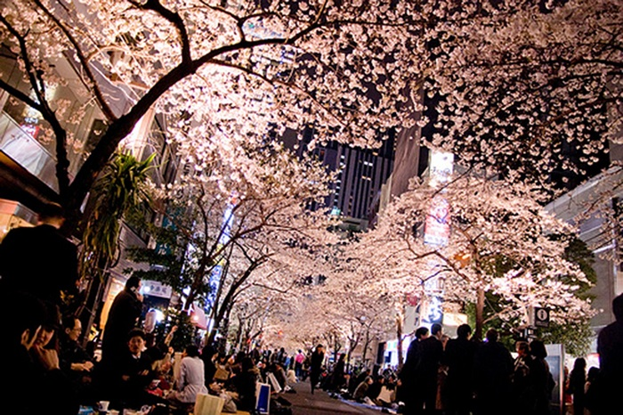 street-night-sakura