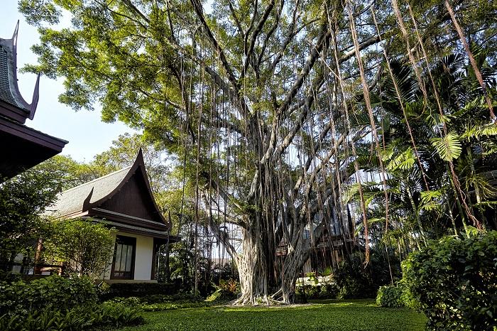 Chiva-Som Banyan Tree