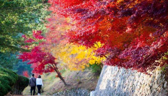 Пять причин купить билеты в Южную Корею прямо сейчас!