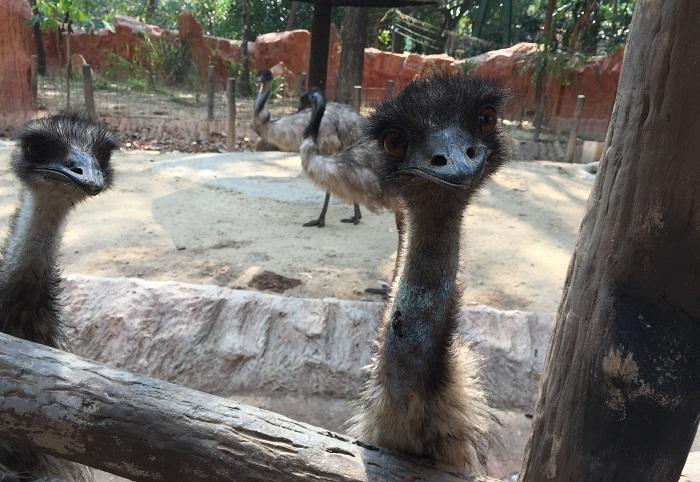 Неизвестный Таиланд: Потрясающий Зоопарк в Чианг Мае