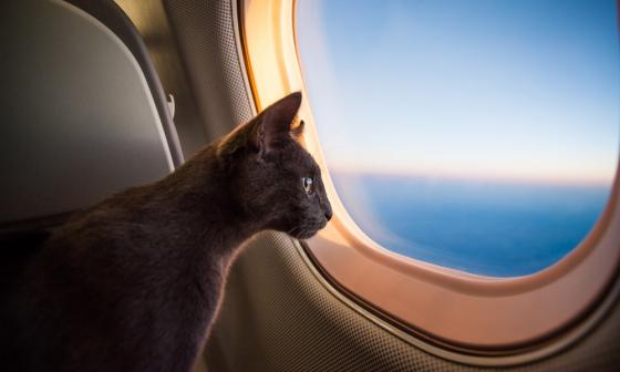 Новые правила перевозки животных на рейсах Utair